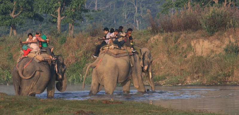Jungle_Safari_Chitwan