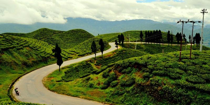 Kanyam Tea Garden - khojnu.com